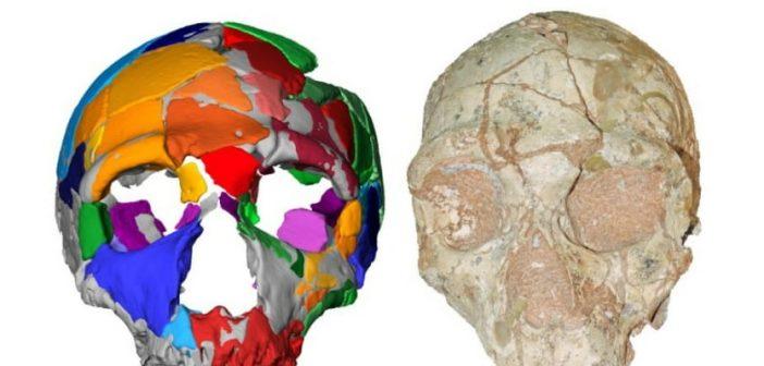 Στην Ελλάδα το παλαιότερο δείγμα του Homo sapiens της Ευρασίας